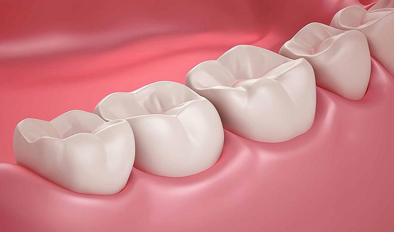 Cấu tạo của răng hàm gồm 2 phần: Thân và chân răng